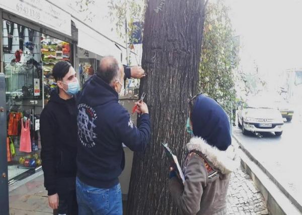 دربخش مرکزی شهر تهران، حذف زوائد فیزیکی از روی درختان خیابان، ولی عصر (عج) آغاز شد